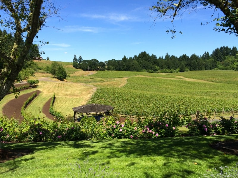 Elk Cove Vineyard