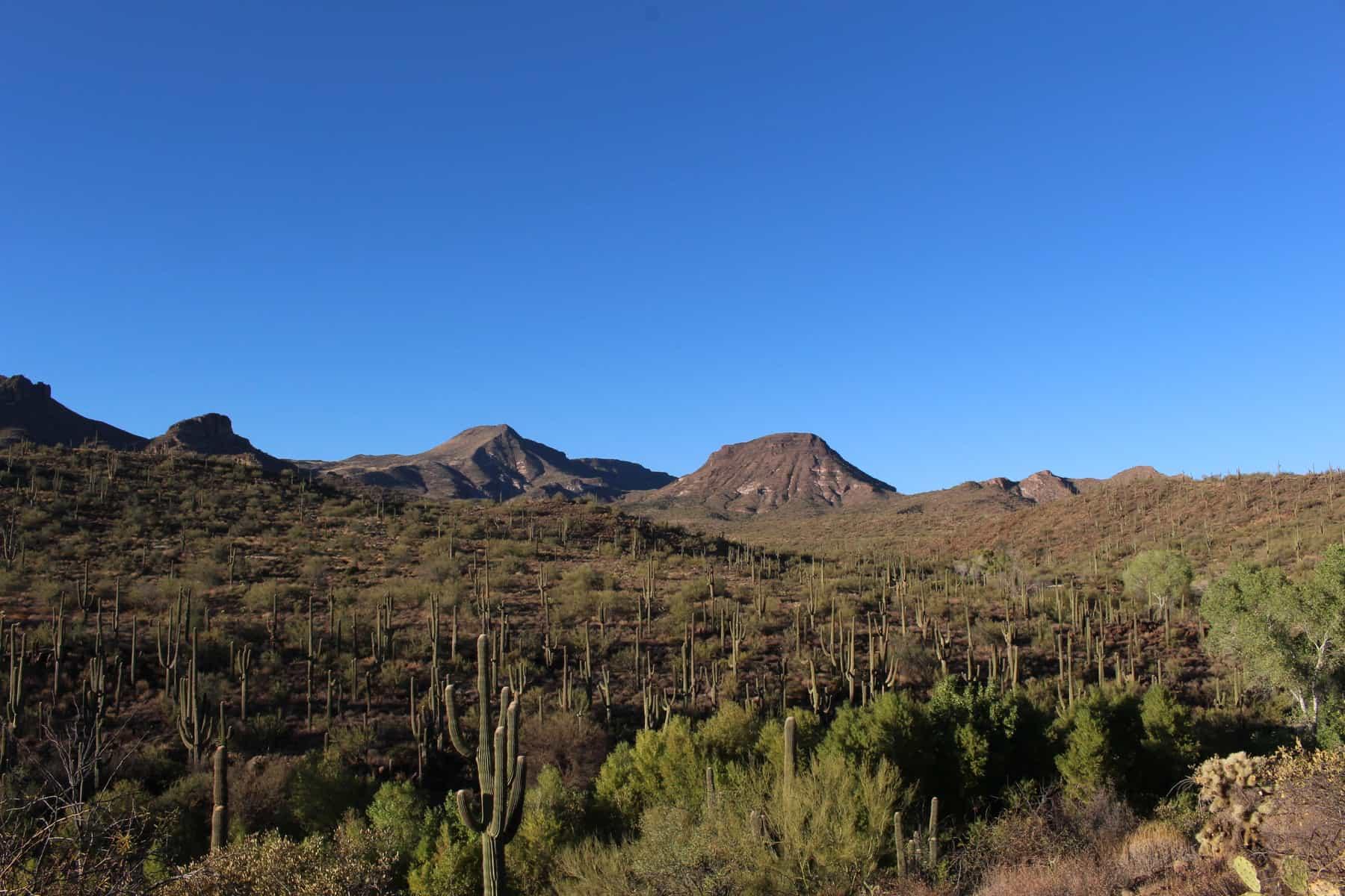 Saguaro at Spur Cross Trail