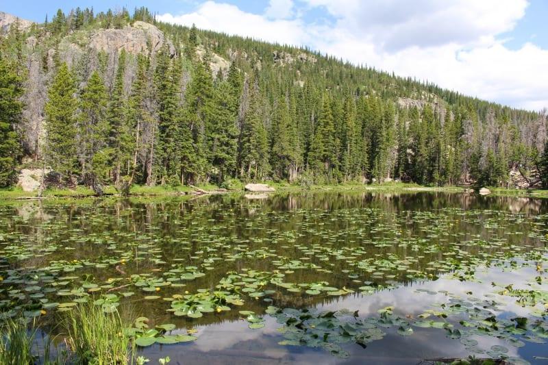Nymph Lake Rocky Mountain