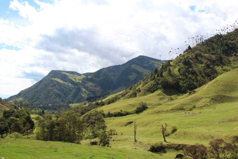 Pasture Cocora