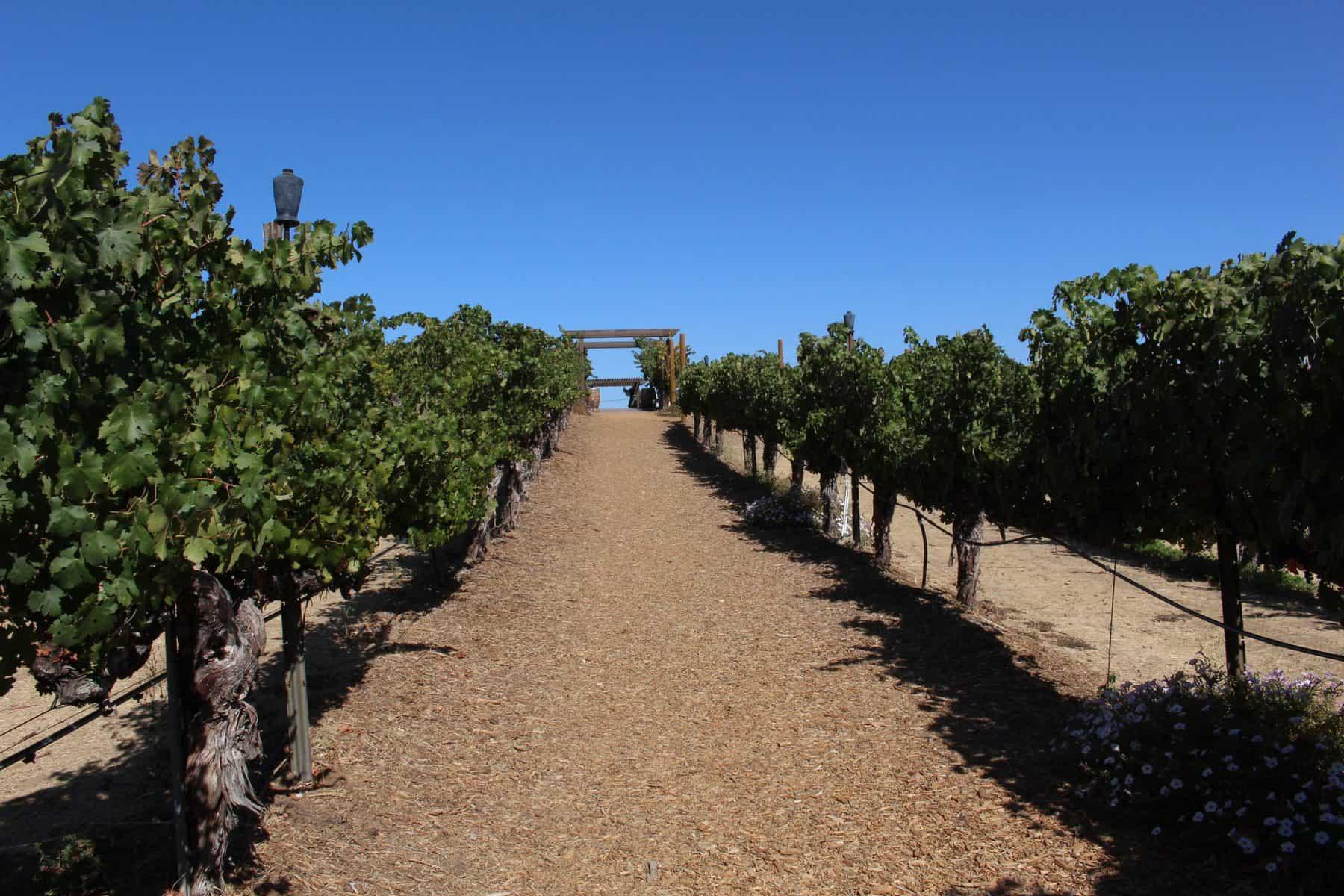 Wilson Creek Vineyard in Temecula