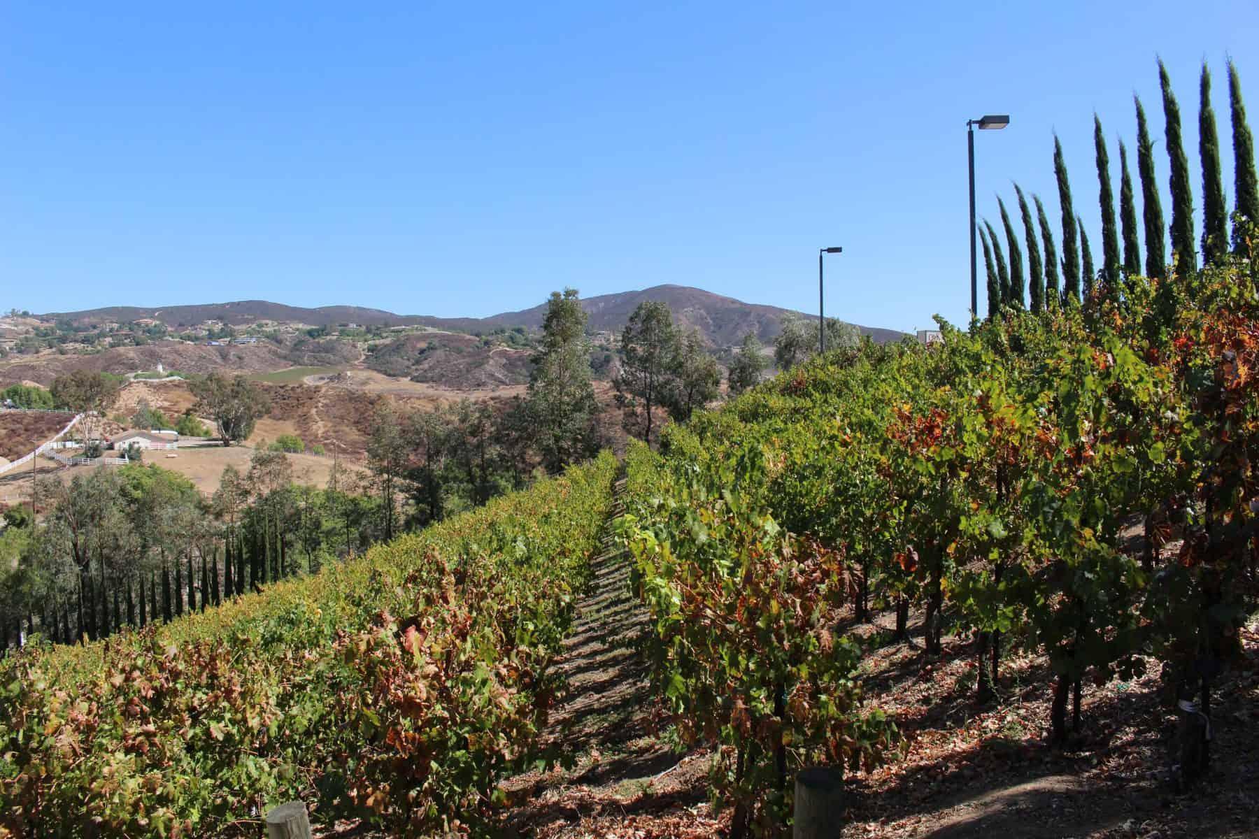 Oak Mountain Vineyard Temecula Weekend Getaway