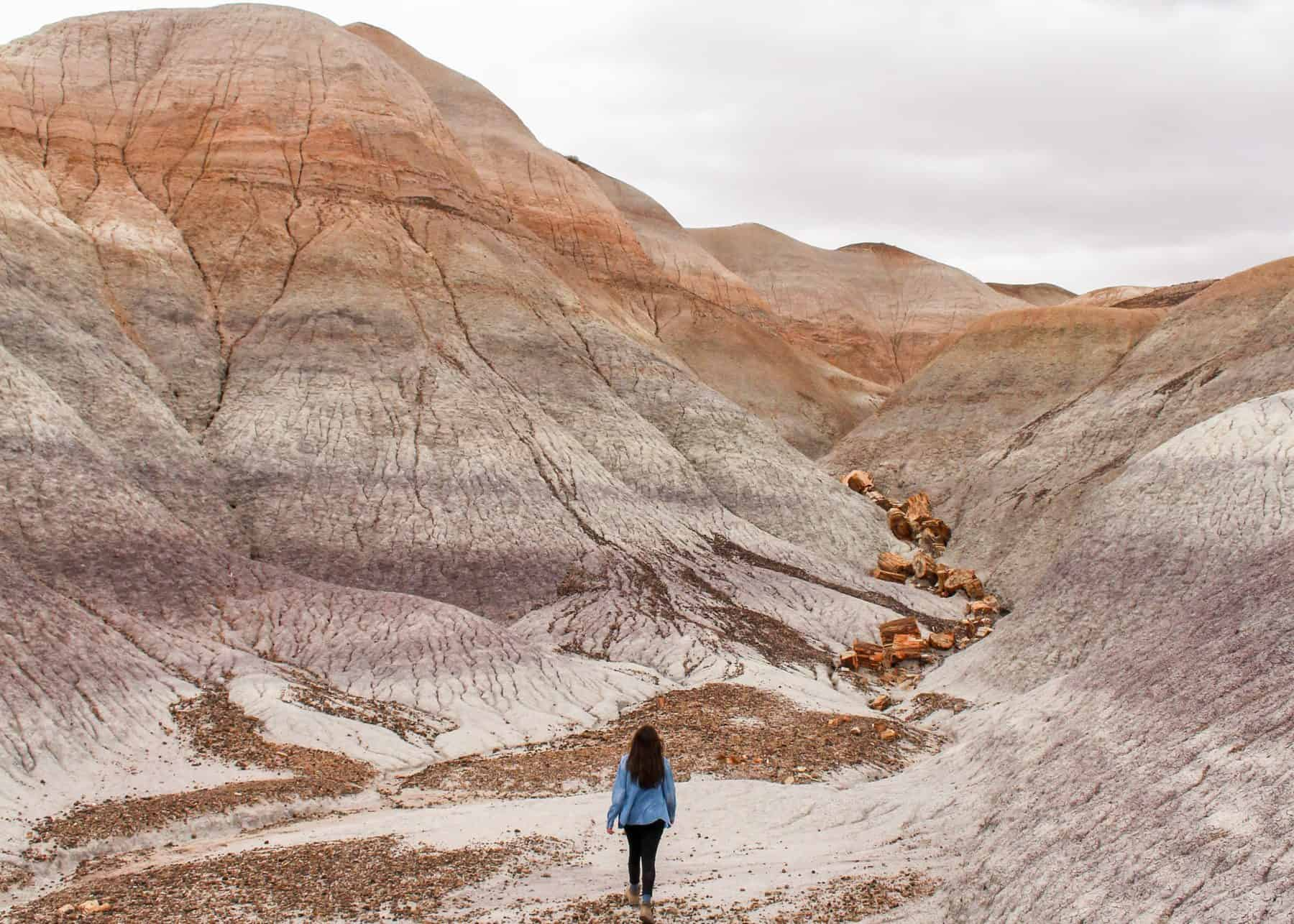 Petrified Forest National Park Hike