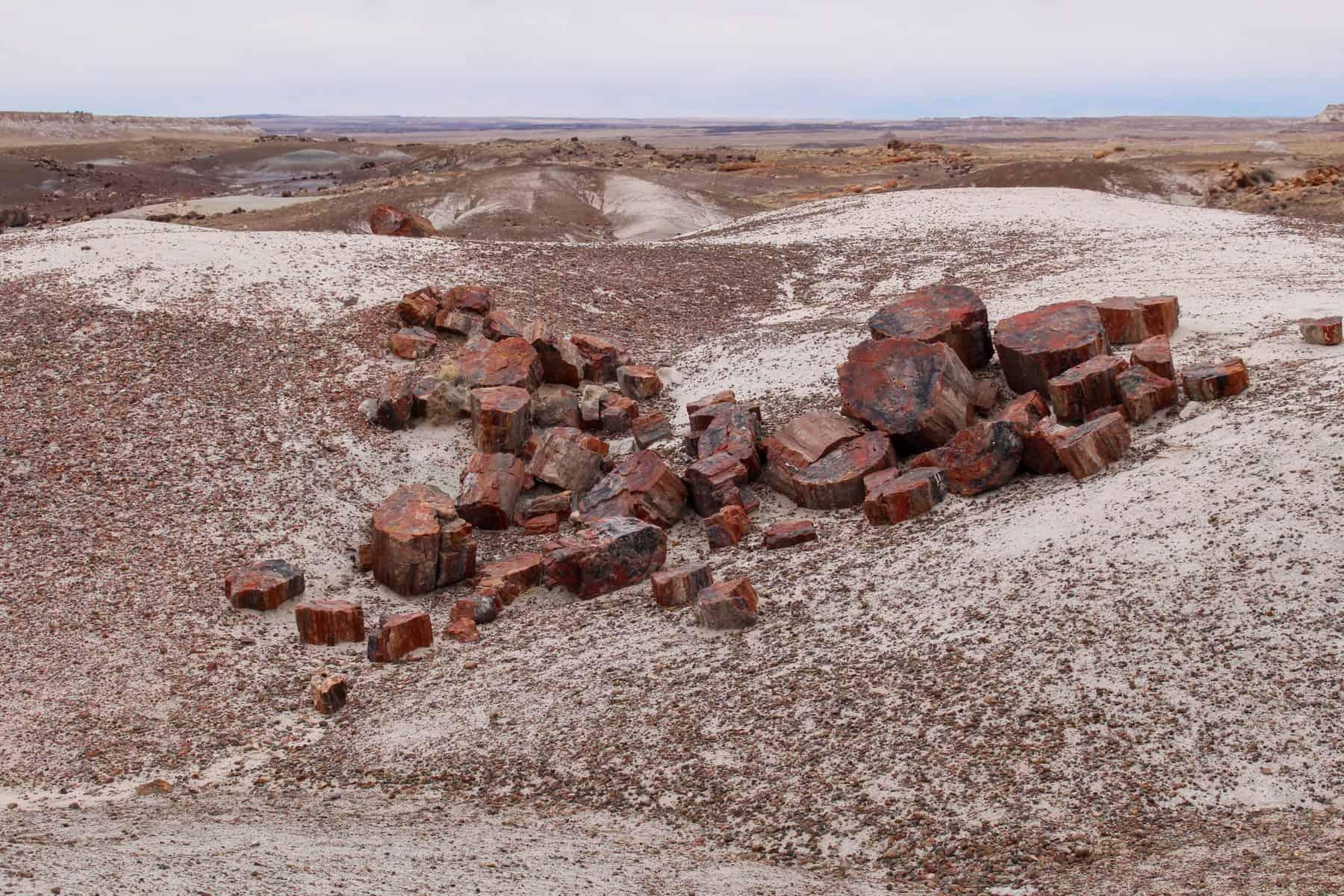 Petrified Wood Deposits