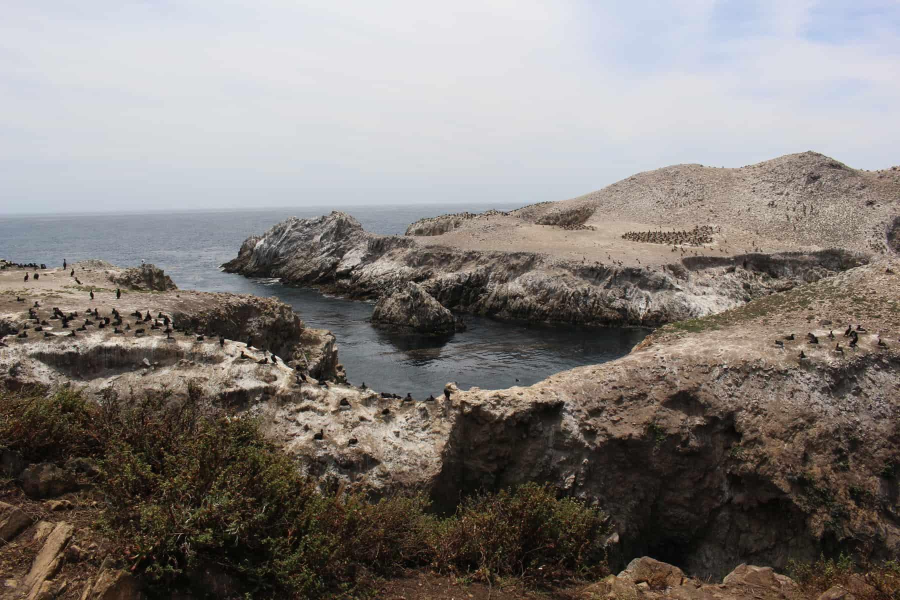 Bird Island Point Lobos