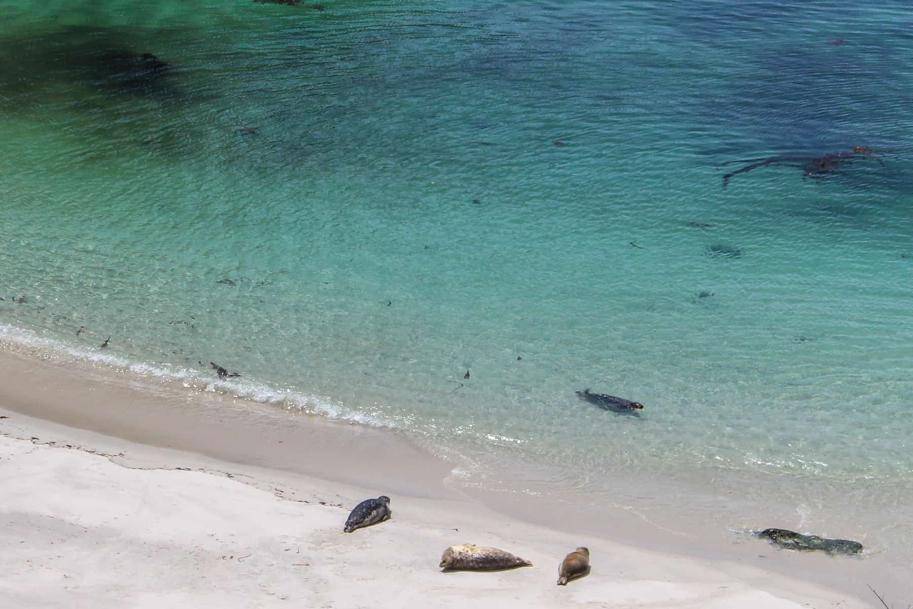 Sea Lions in Point Lobos