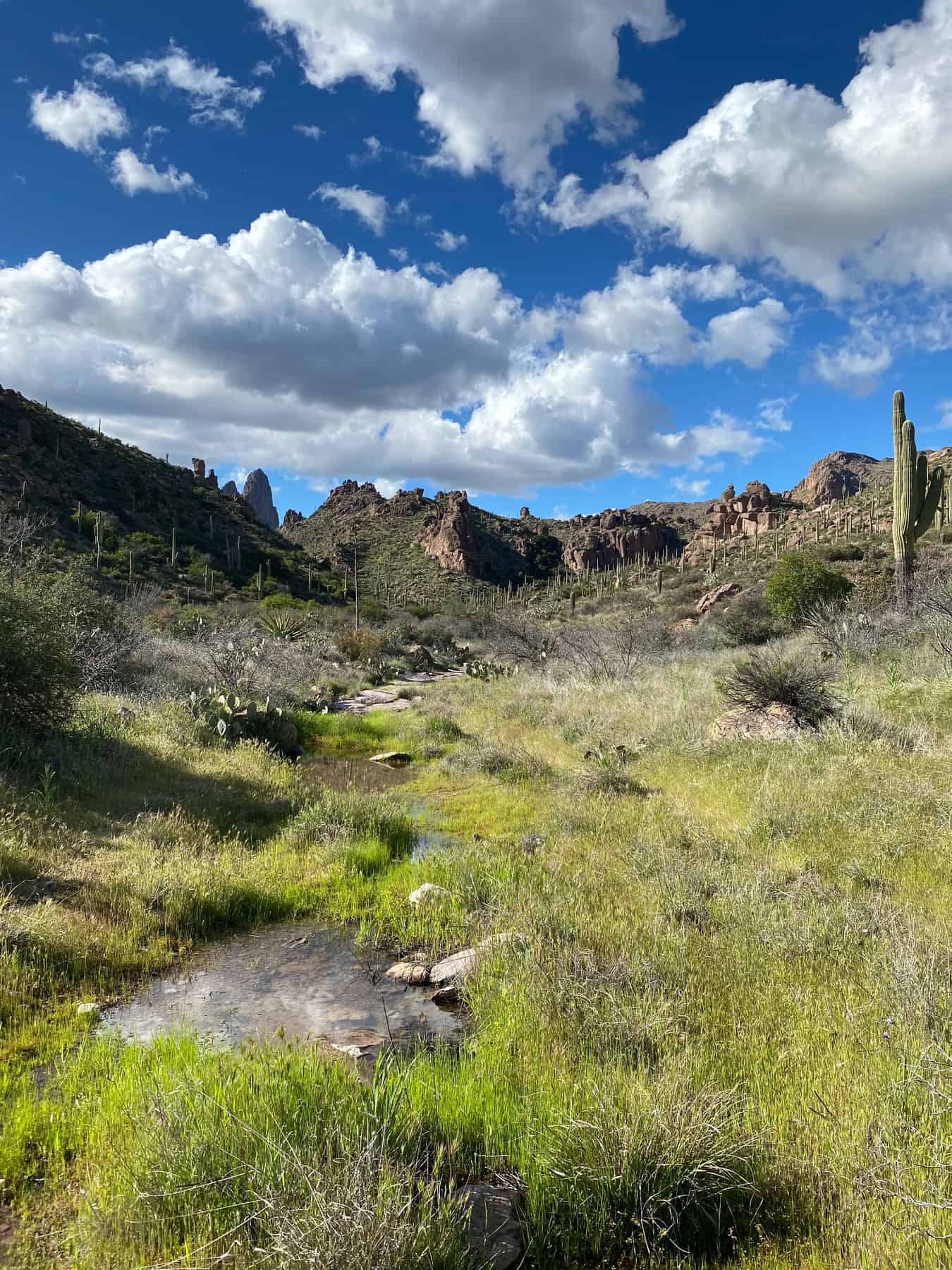 Superstitions Hike Bluff Springs
