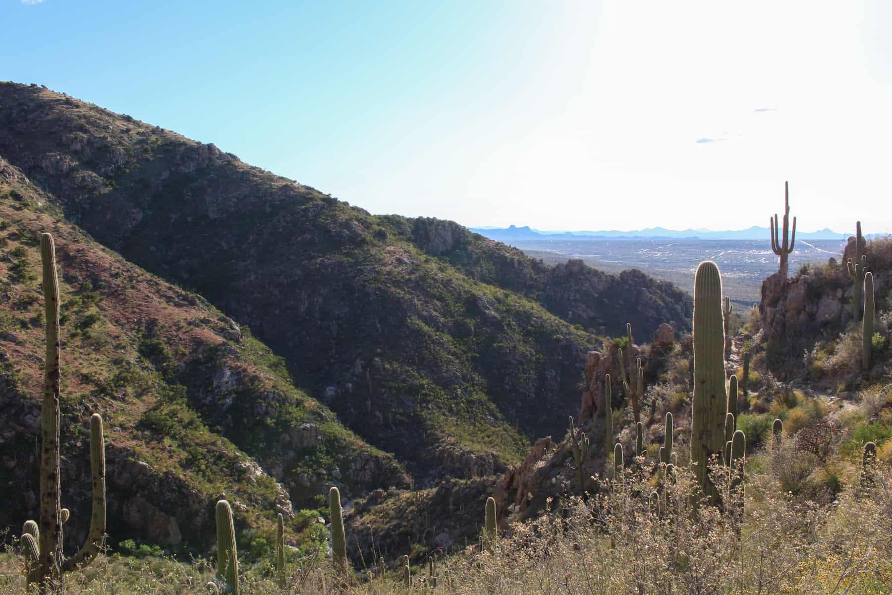 Catalina State Park Hike