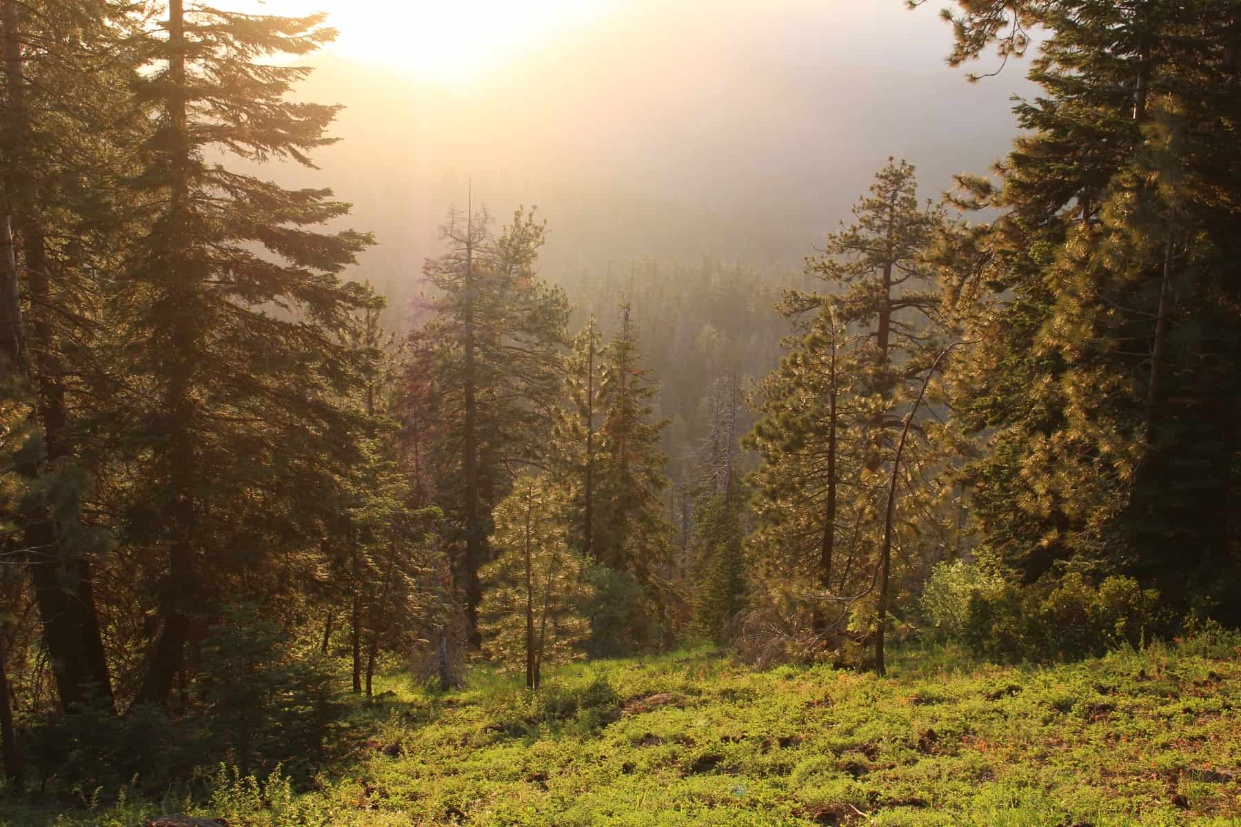Sequoia National Park Hike