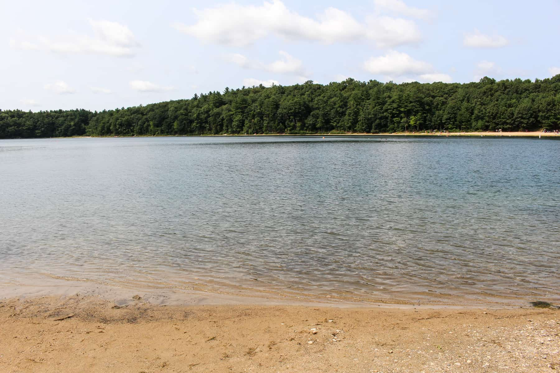 Walden Pond Summer